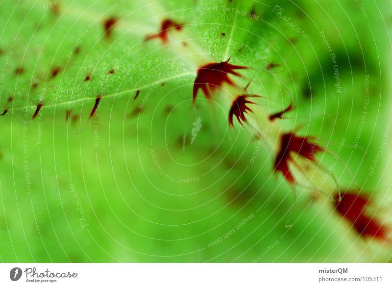 green oddity grün rot Pflanze Makroaufnahme Unschärfe stachelig seltsam Stengel Blatt außergewöhnlich verrückt dunkel Defensive Im Wasser treiben Wachstum quer