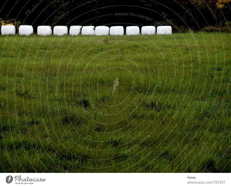 11 Freunde, wartend Gedeckte Farben Außenaufnahme Dämmerung Sportveranstaltung Wiese grün weiß Tod Konkurrenz Strohballen verpackt Schlagloch Zahnlücke