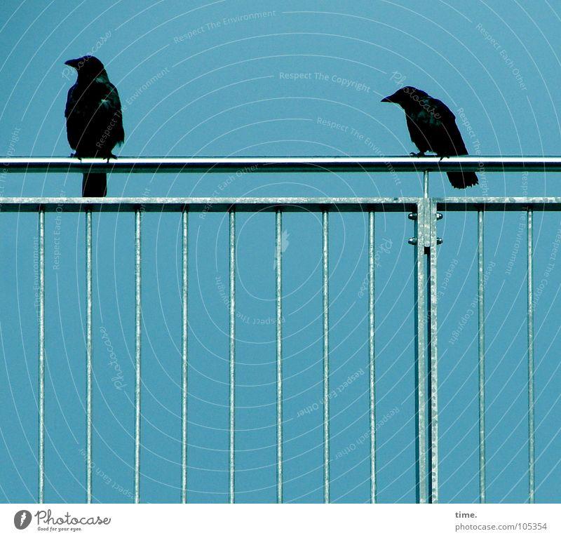 Beziehungskrise Himmel blau schwarz Metall 2 Vogel sitzen Geländer Schmerz Kino Gitter Frustration Blech hocken Hochmut ducken