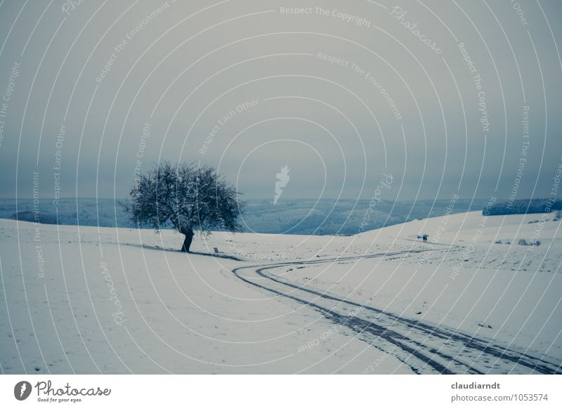 Weißes Land Himmel Natur blau Pflanze weiß Baum Landschaft ruhig Winter Ferne Wald kalt Schnee Wege & Pfade Freiheit Paar