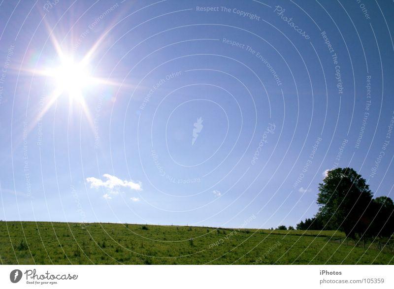 SunStar Himmel Natur blau Baum Sonne Sommer Wolken Wiese Freiheit Gras Wetter Stern Stern (Symbol) Verlauf Farbverlauf