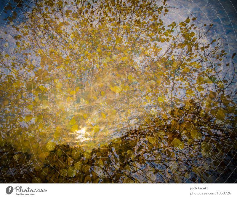 Herbstgold Baum Blätterdach leuchten natürlich Wärme Zufriedenheit Einigkeit Idylle Inspiration träumen Wandel & Veränderung Doppelbelichtung Illusion
