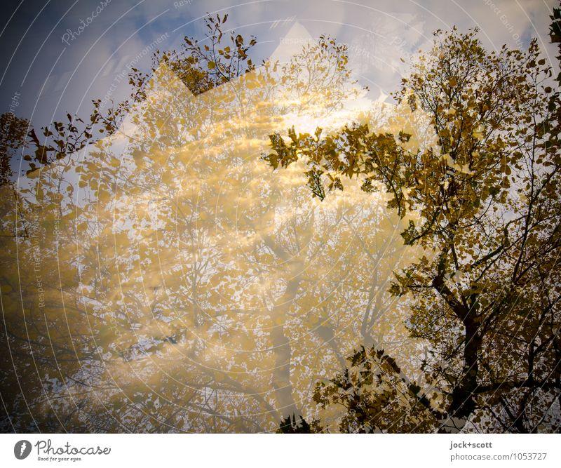 Aurum schön Sonne Baum Tier Wärme Herbst natürlich Zeit träumen Zufriedenheit leuchten Idylle gold frei Schönes Wetter Wandel & Veränderung