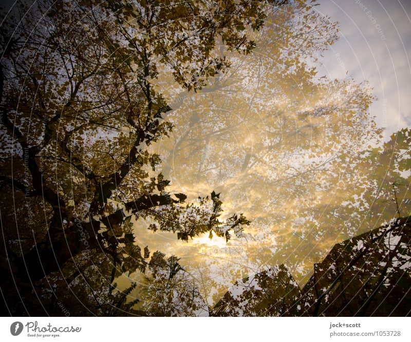 Blattgold Herbst Blätterdach natürlich Geborgenheit Einigkeit Idylle Inspiration Surrealismus Illusion Reaktionen u. Effekte Lichtspiel Doppelbelichtung