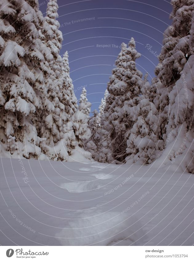 Don't eat yellow snow Natur Ferien & Urlaub & Reisen blau weiß Baum Einsamkeit Landschaft ruhig Winter Wald kalt Berge u. Gebirge Schnee Idylle Tourismus frisch