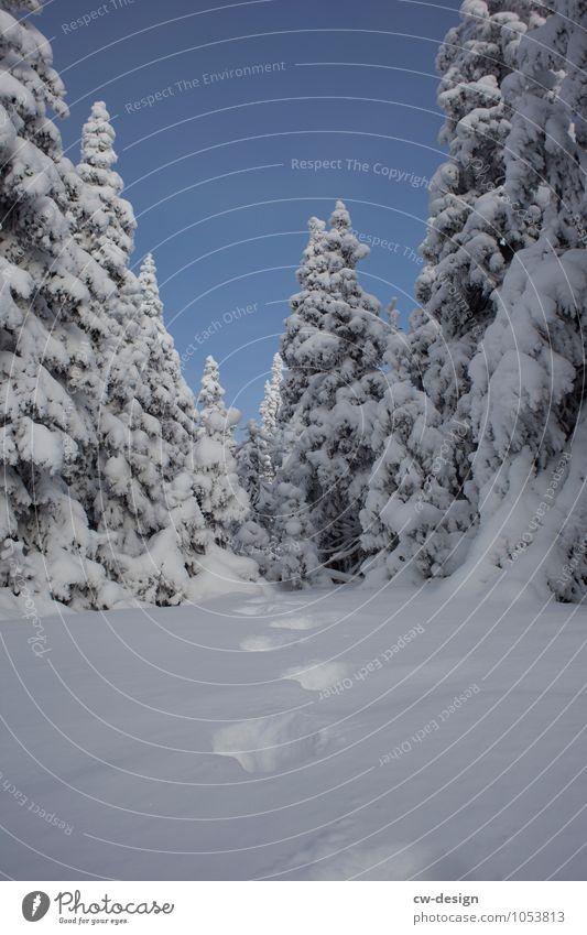 Winterwunderland Natur Landschaft Pflanze Wolkenloser Himmel Klima Wetter Schönes Wetter Eis Frost Schnee Baum Park Wiese Wald Alpen Berge u. Gebirge