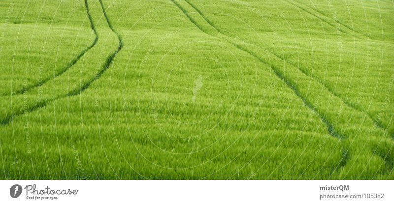 gladiator was here grün Einsamkeit Ferne Gras Landschaft 2 Feld Gesundheit Deutschland Hintergrundbild Industrie Wachstum USA Spuren Getreide China