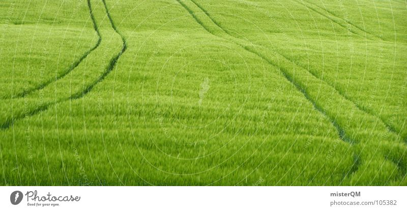gladiator was here grün Feld 2 Wachstum gedeihen Weizen Gerste Hafer Roggen Mehl Hirse Ferne Einsamkeit Hintergrundbild Gesundheit lecker Spuren Sachsen Gras