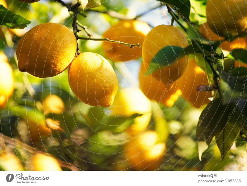 Vitamin-C-Wald I Frucht Kunst ästhetisch Zitrone Zitronensaft Zitronenbaum zitronengelb Zitronenblatt Wachstum reif Ernte viele vitaminreich Vitamin C sauer