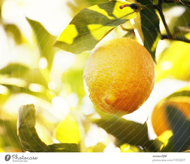 Vitamin-C-Wald II Natur Sonne Gesunde Ernährung Kunst frisch ästhetisch lecker Ernte reif ökologisch Zitrone sauer zitronengelb Zitronensaft Zitronenbaum