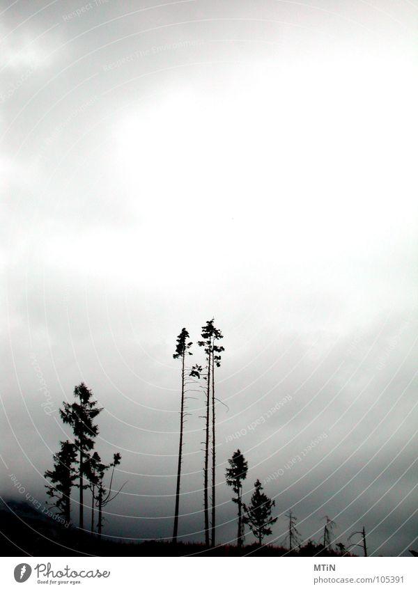 kahlschlag Himmel Baum Einsamkeit Wald dunkel Berge u. Gebirge Tatra Slowakische Republik