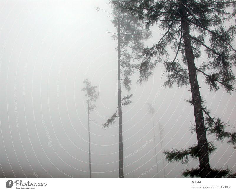 gruselig o_O Baum Einsamkeit Wald dunkel kalt Traurigkeit Nebel bedrohlich grauenvoll