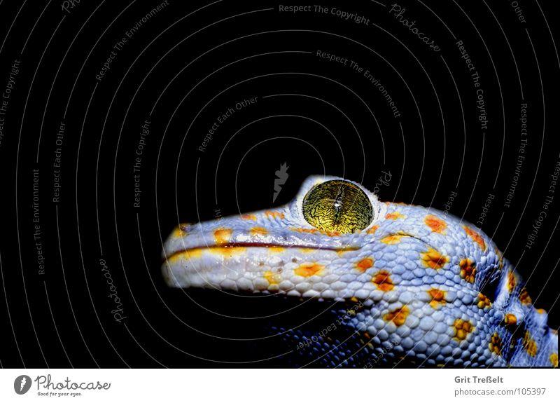 Reptil weiß schwarz gelb Punkt Zoo Tier Reptil Terrarium