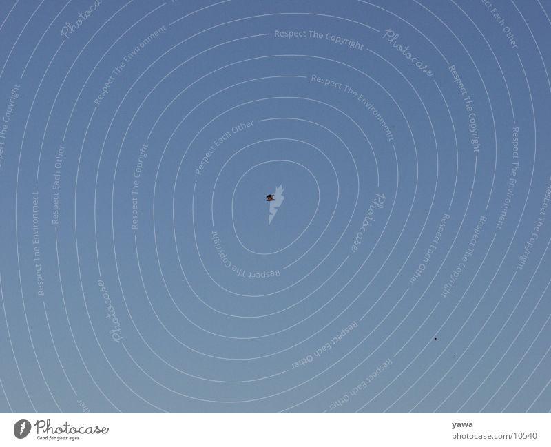 kleine natur Natur Himmel blau Freiheit Vogel Adler