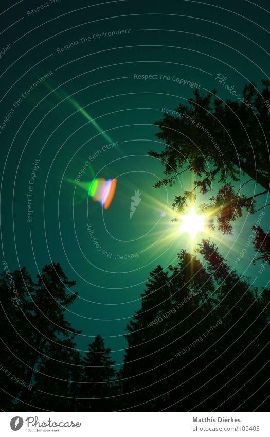 REFLEXION Himmel grün schön Baum rot Sonne Sommer Wald hell Beleuchtung Regen orange wandern Stern Stern (Symbol) Spaziergang