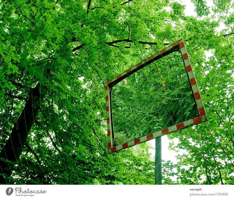 Spiegel Natur grün Baum Wald Schilder & Markierungen Verkehr Hinweisschild Baumstamm Rahmen Straßenverkehr Stab Spiegelbild Verkehrsschild Verzerrung