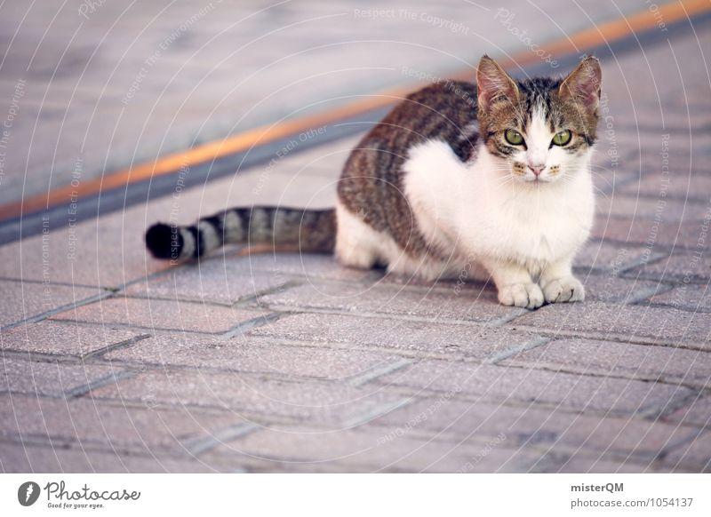 Look At Me. Katze Einsamkeit Tier sitzen Haustier Katzenauge Katzenpfote Katzenfreund