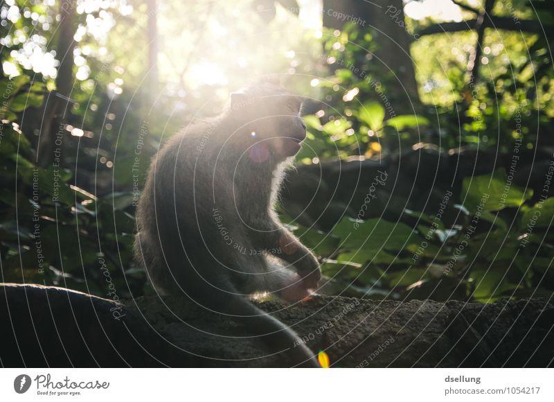 Ich werd verrückt! Abenteuer Natur Sommer Schönes Wetter Urwald Tier Affen 1 exotisch frech listig lustig Neugier niedlich klug wild braun grau grün Interesse