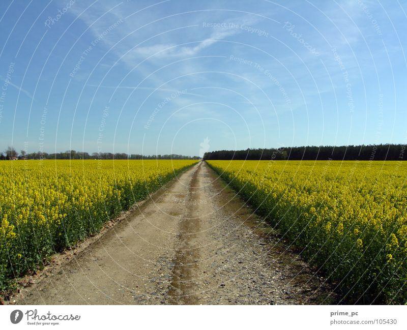 Pfade des Lebens Feld Blume Wolken Wege & Pfade Himmel Landschaft Pflanze Straße