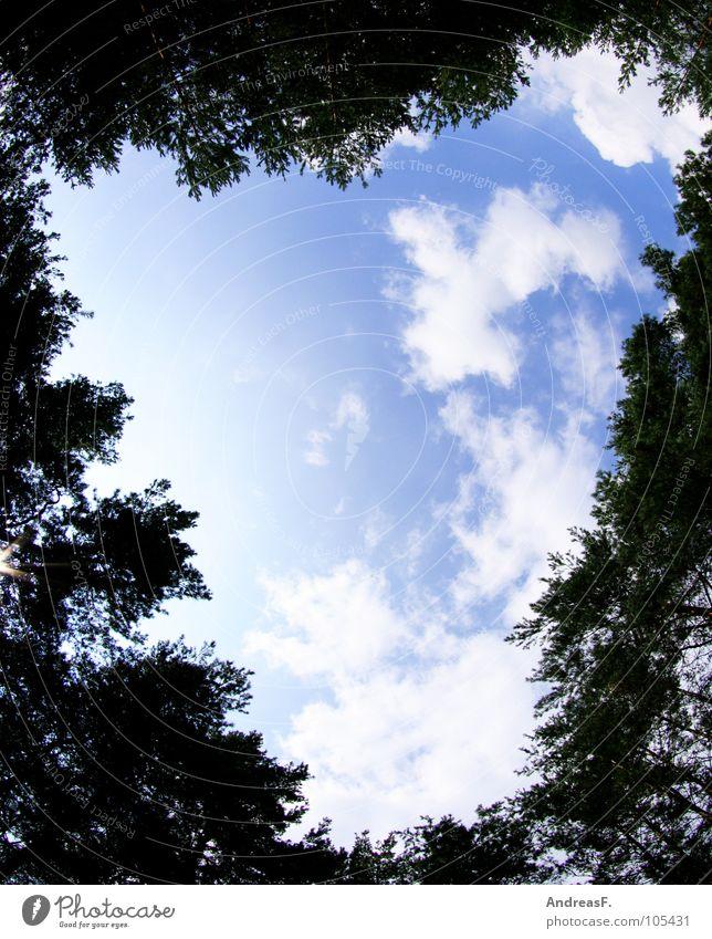 Herz ist Trumpf Himmel Baum Freude Wolken Wald träumen Zusammensein Spaziergang Romantik Valentinstag
