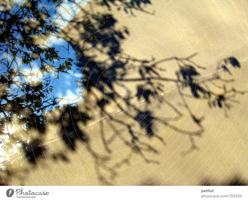 Schattenbaum Natur Himmel weiß Baum blau Blatt schwarz Wolken Leben Bewegung grau Ast vorwärts Vorhang hinten