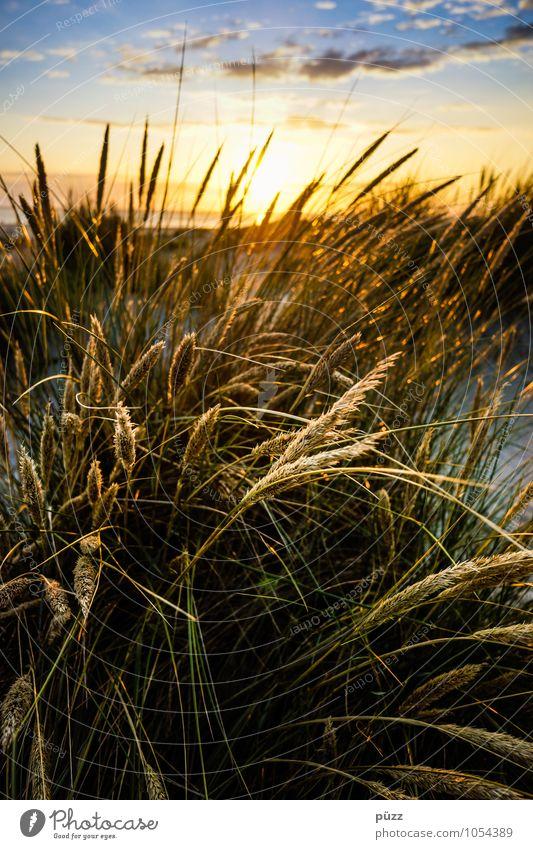 Gräser Himmel Natur Ferien & Urlaub & Reisen blau Pflanze grün Sommer Sonne Meer Landschaft Wolken Strand gelb Wärme Küste Gras