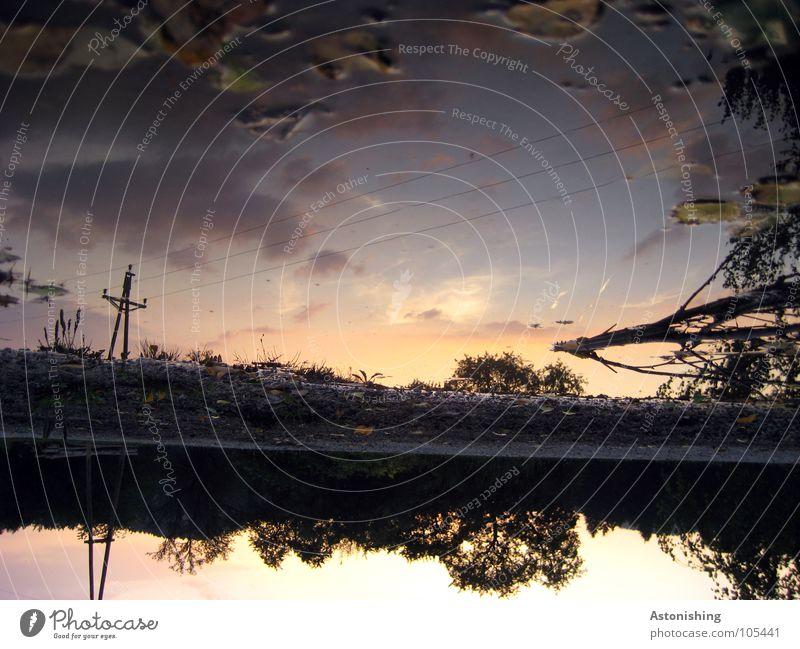 der Sonnenuntergang fällt ins Wasser Umwelt Natur Landschaft Pflanze Luft Himmel Wolken Sommer Schönes Wetter Baum Blatt schwarz Pfütze verkehrt Elektrizität