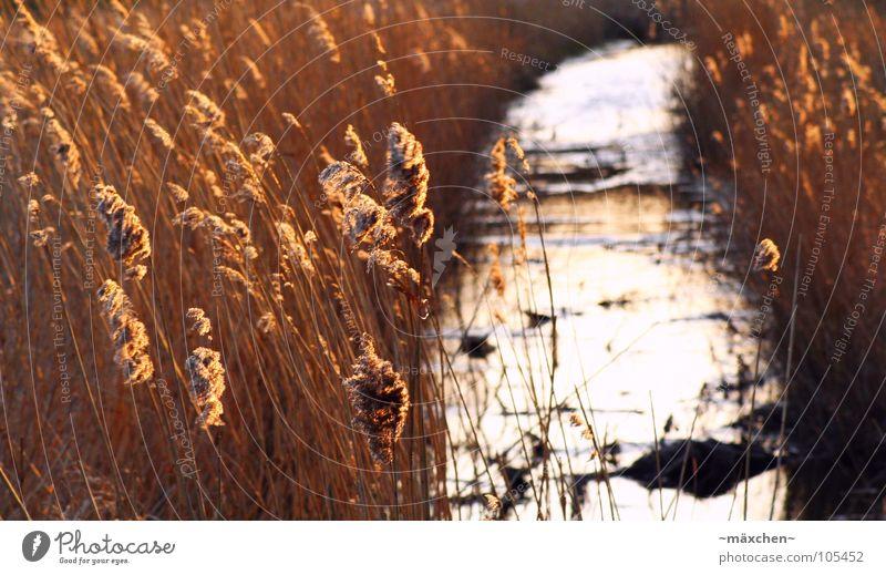 romantische Stille Schilfrohr Bach Sonnenuntergang Stengel Reflexion & Spiegelung Wellen Romantik ruhig Rügen Fluss Wasser Stein Wind orange water river wave