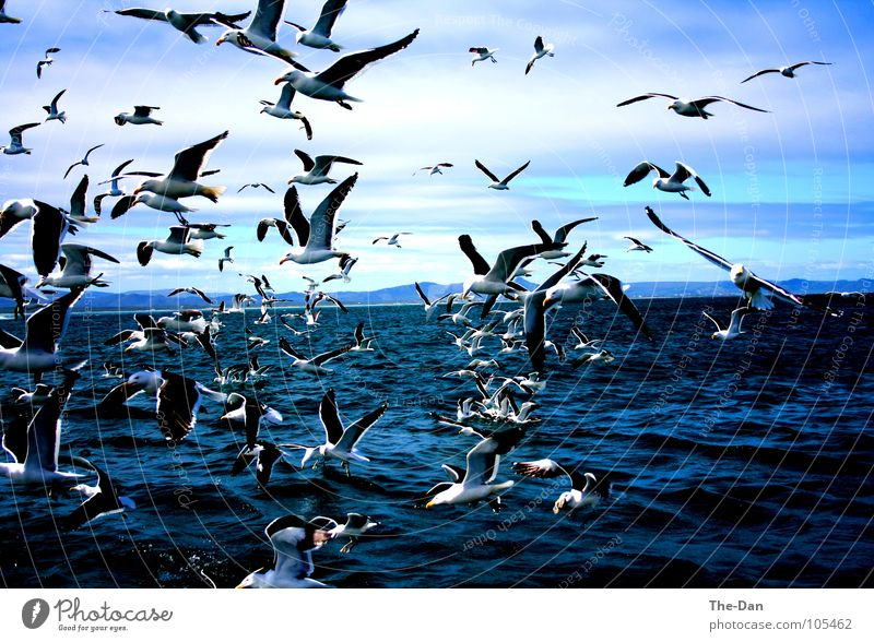 Auf zum Shark-Diving! Wasser Meer Ferien & Urlaub & Reisen Freundschaft Elektrizität Afrika Wissenschaften Wildnis