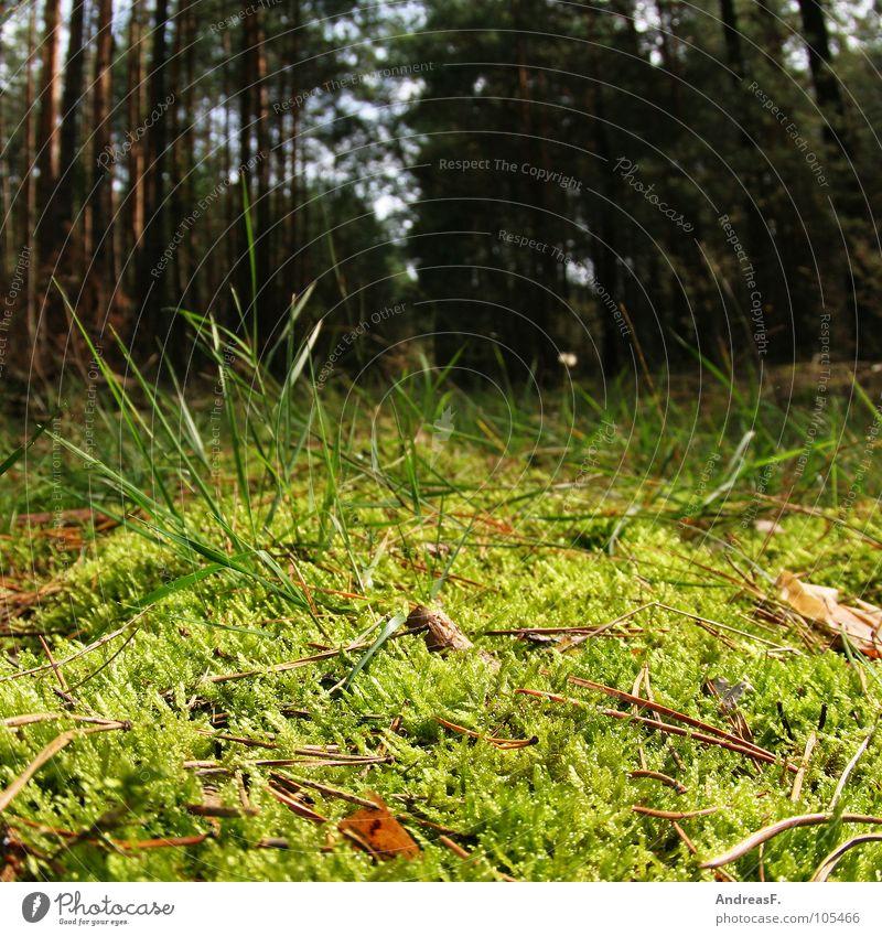 Pilze suchen II Natur grün Baum Wald Herbst Gras Holz Ast Insekt Kiefer Geäst Spinne Reptil Nadelbaum Waldboden Nadelwald