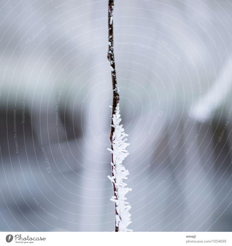 halb-halb Pflanze Winter Eis Frost Ast Raureif außergewöhnlich kalt blau weiß Farbfoto Außenaufnahme Nahaufnahme Detailaufnahme Makroaufnahme Menschenleer Tag