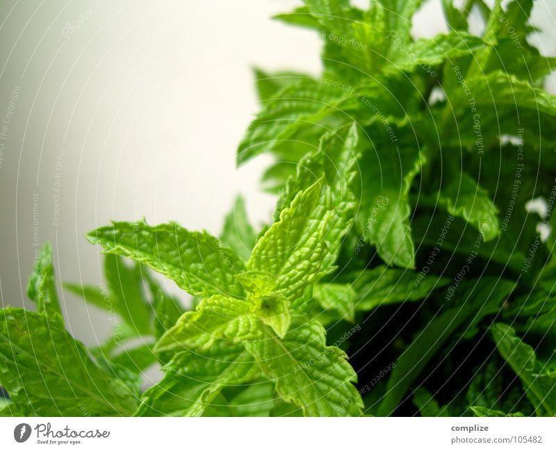 (minze) grün Minze Zutaten Gesundheit dunkelgrün hellgrün Blattadern Pflanze Melisse Kräutergarten Wachstum Vegetarische Ernährung Makroaufnahme Nahaufnahme