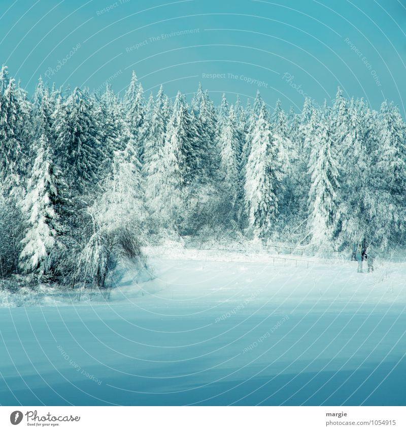 Doppelter Winterwald Ferien & Urlaub & Reisen Winterurlaub Natur Wasser Wolkenloser Himmel Eis Frost Schnee Schneefall Baum Fichtenwald Nadelbaum Tanne Wald