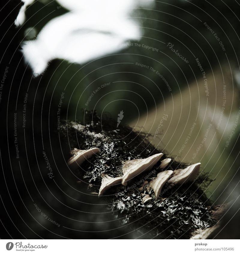 Shroomies, Flechten, Flattermänner Natur schön Baum Pflanze Blatt Tier Feld Trauer Kommunizieren Ast Wildtier Verzweiflung Pilz Ekel Tiefenschärfe Norwegen