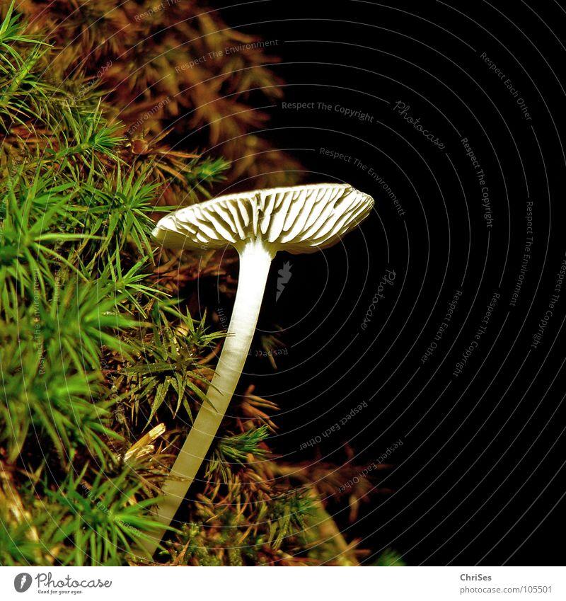 Aus dem Dunkel ins Licht Natur weiß grün Pflanze Sommer schwarz dunkel braun Pilz Allgäu