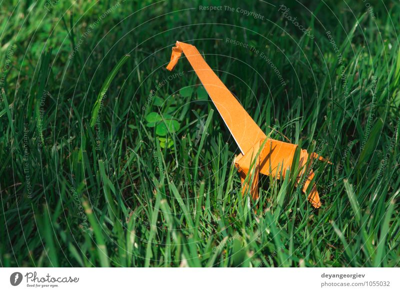 Natur Ferien & Urlaub & Reisen grün weiß Freude Tier gelb Wiese natürlich Spielen Kunst Park wild Design Dekoration & Verzierung Tourismus