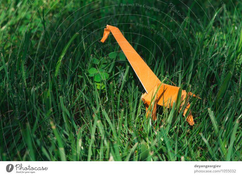 Origami orange Farbe Giraffe Design Freude Spielen Ferien & Urlaub & Reisen Tourismus Safari Dekoration & Verzierung Handwerk Kunst Zoo Natur Tier Park Wiese