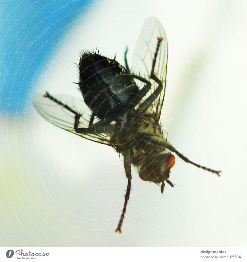 Nr.6 lebt weiß rot schwarz Auge klein Beine Wellen groß warten Fliege Flügel Schnur unten Insekt lecker Flughafen