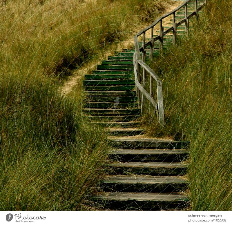 STILLE Meer See Holz grün Gras Natur Strand geschwungen Nagel Küste Erde Sand Nordsee Stranddüne Treppe Wege & Pfade aufwärts Geländer Ziel wohin? mare sea