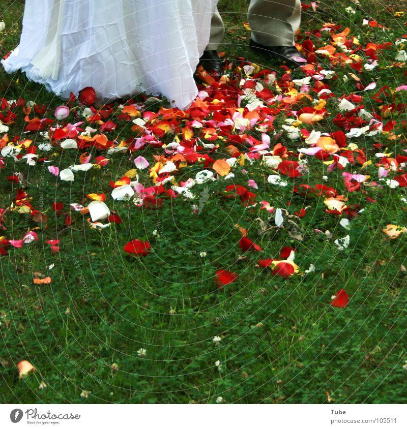 Blütenmeer und mehr. rot weiß mehrfarbig rosa Frau Mann Blatt Blütenblatt Rose Tulpe grün Braut schön Bräutigam grau Ehepaar Schuhe Brautkleid Anzug Hochzeit