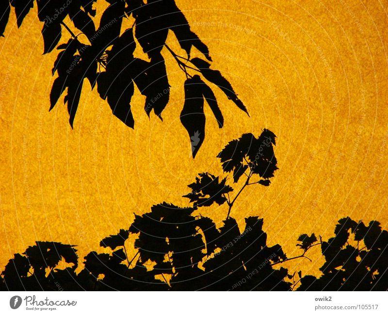Pas de deux Natur Pflanze Sommer Sonne Baum Blatt Haus schwarz Umwelt Wand Bewegung Mauer Garten Zusammensein Fassade orange