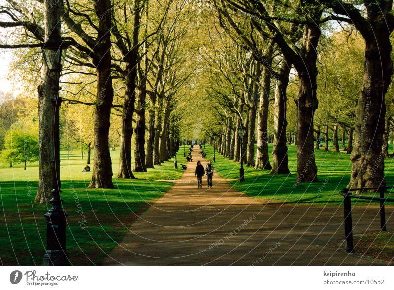 Walk along the Hyde Park Mensch Natur Baum Sonne Blume grün Erholung Wiese Gras Wege & Pfade Luft gehen Spaziergang Buckingham Palace
