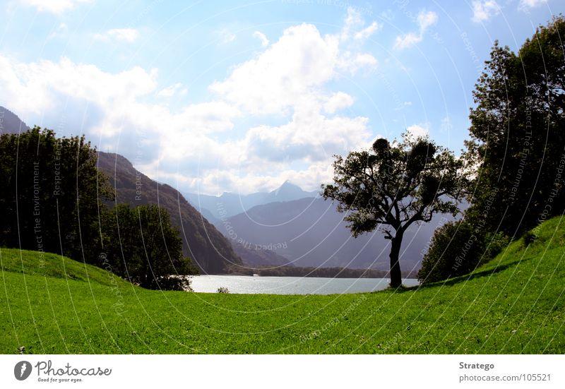 chill out Wiese grün Baum Hügel See Wolken Wald Gras Walensee saftig Gelassenheit Sonnenbad Ferne Schweiz Insekt Frieden Makroaufnahme Nahaufnahme