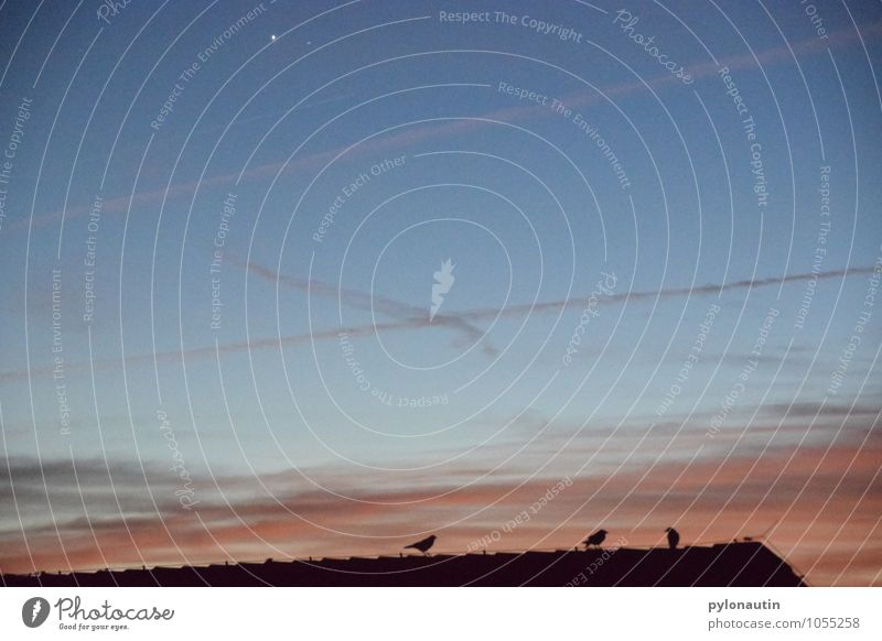 Hausbesetzung zu Dritt Himmel Wolken Sonnenaufgang Sonnenuntergang Dach Tier Vogel Schwarm fliegen blau orange schwarz Krähe Farbfoto Außenaufnahme