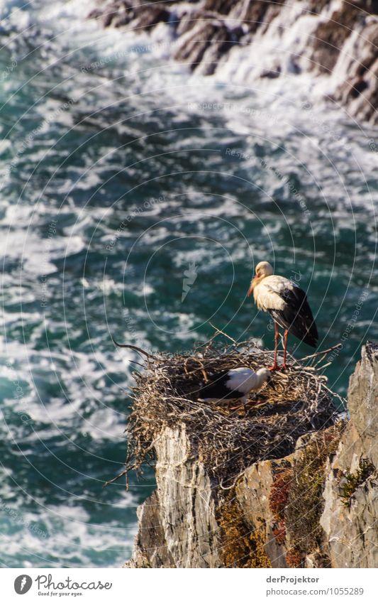 Nistende Störche auf Felsen Natur Ferien & Urlaub & Reisen Pflanze Sommer Meer Landschaft Tier Strand Ferne Umwelt Gefühle Küste Freiheit Vogel Felsen Wildtier