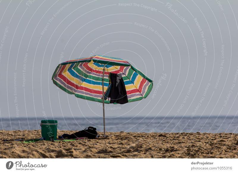 Und wo bist du? Natur Ferien & Urlaub & Reisen Pflanze Sommer Sonne Meer Landschaft ruhig Freude Tier Strand Umwelt Gefühle Küste Glück Tourismus