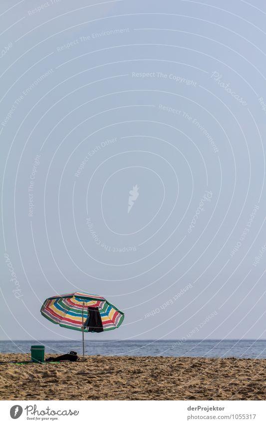 Mittagspause am Strand Natur Ferien & Urlaub & Reisen Pflanze Sommer Sonne Meer Landschaft Tier Strand Ferne Umwelt Gefühle Küste Freiheit Zufriedenheit Wellen