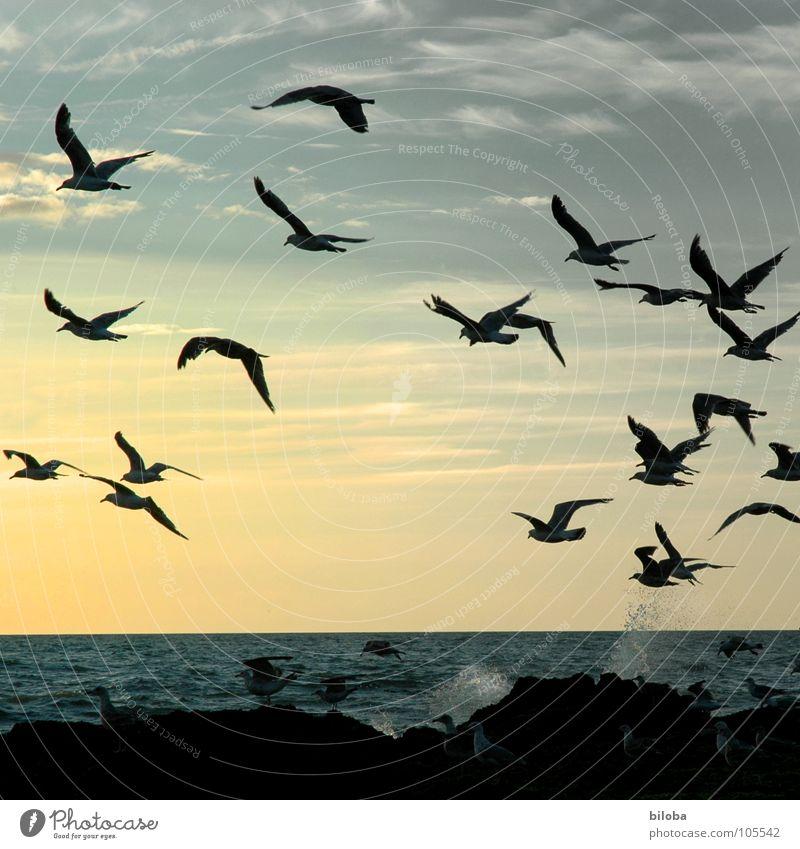 auf und davon Möwe Vogel Meeresvogel oben Küste Strand Fernweh Dämmerung Nacht Erholung See Abenddämmerung Gischt harmonisch Gegenlicht Möven Wasser water