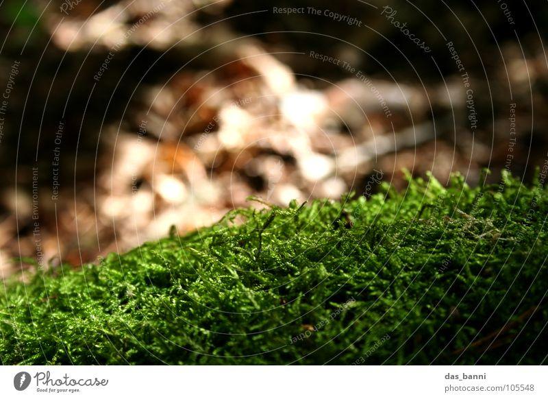 nix los ohne moos grün feucht braun Umweltschutz frisch Herbst Tiefenschärfe Unschärfe Strukturen & Formen harmonisch weich Erholung Physik Makroaufnahme