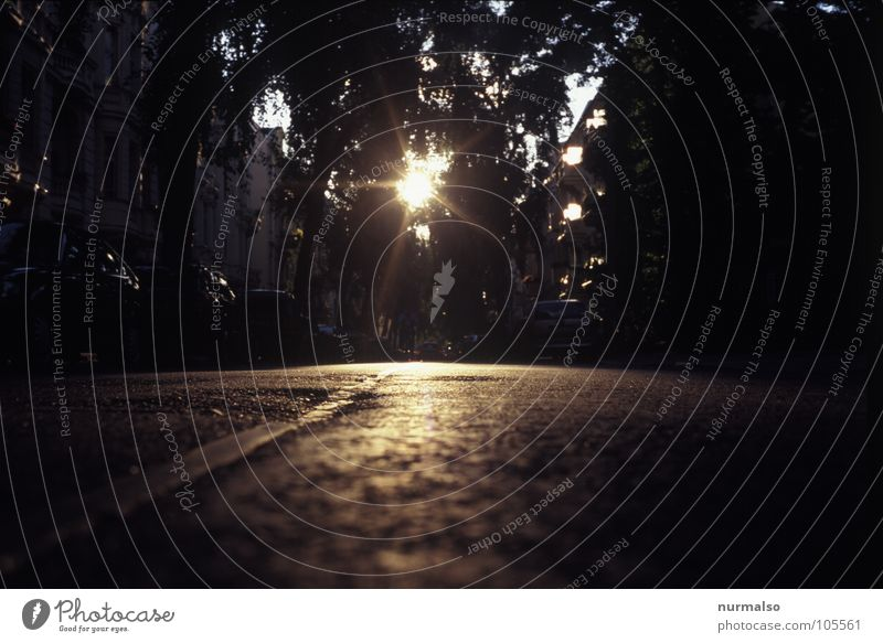 hinter mir . . . Gegenlicht Asphalt Baum Stimmung Verkehrswege Straße Sonne Wege & Pfade gold Abend Treppe Abgang Stern (Symbol) liegen
